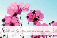 LOT DE 20 - CARTE SIMPLE PHOTO NATURE CROYEZ EN LA LMIERE