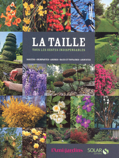 TAILLE IN
