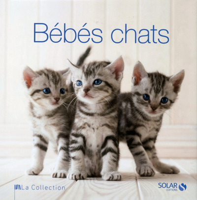 BEBES CHATS - LA COLLECTION