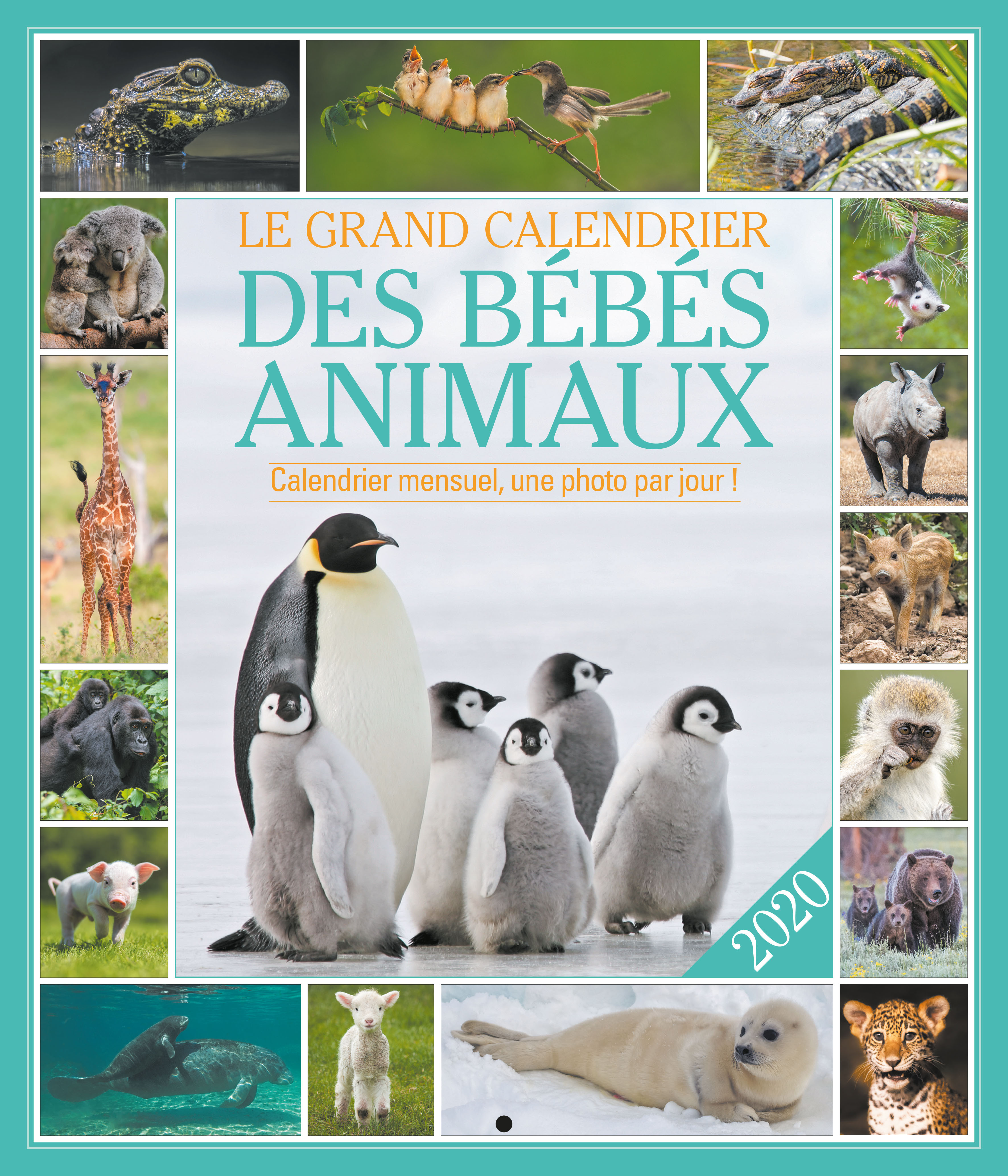 LE GRAND CALENDRIER BEBES ANIMAUX 2020