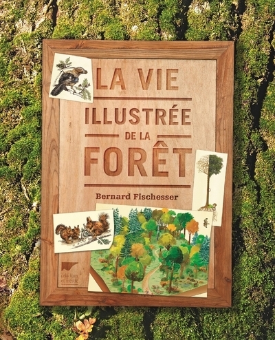 LA VIE ILLUSTREE DE LA FORET