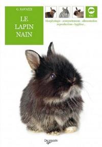 LAPIN NAIN