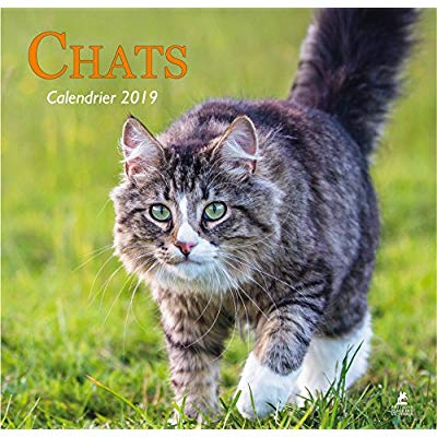 CHATS - CALENDRIER 2019