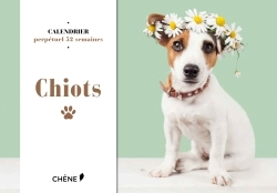 CALENDRIER CHIOTS