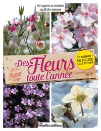DES FLEURS TOUTE L'ANNEE