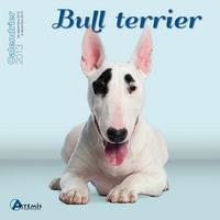 **BULL TERRIER (2013)