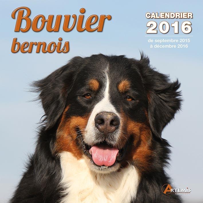 CALENDRIER BOUVIER BERNOIS - 2016