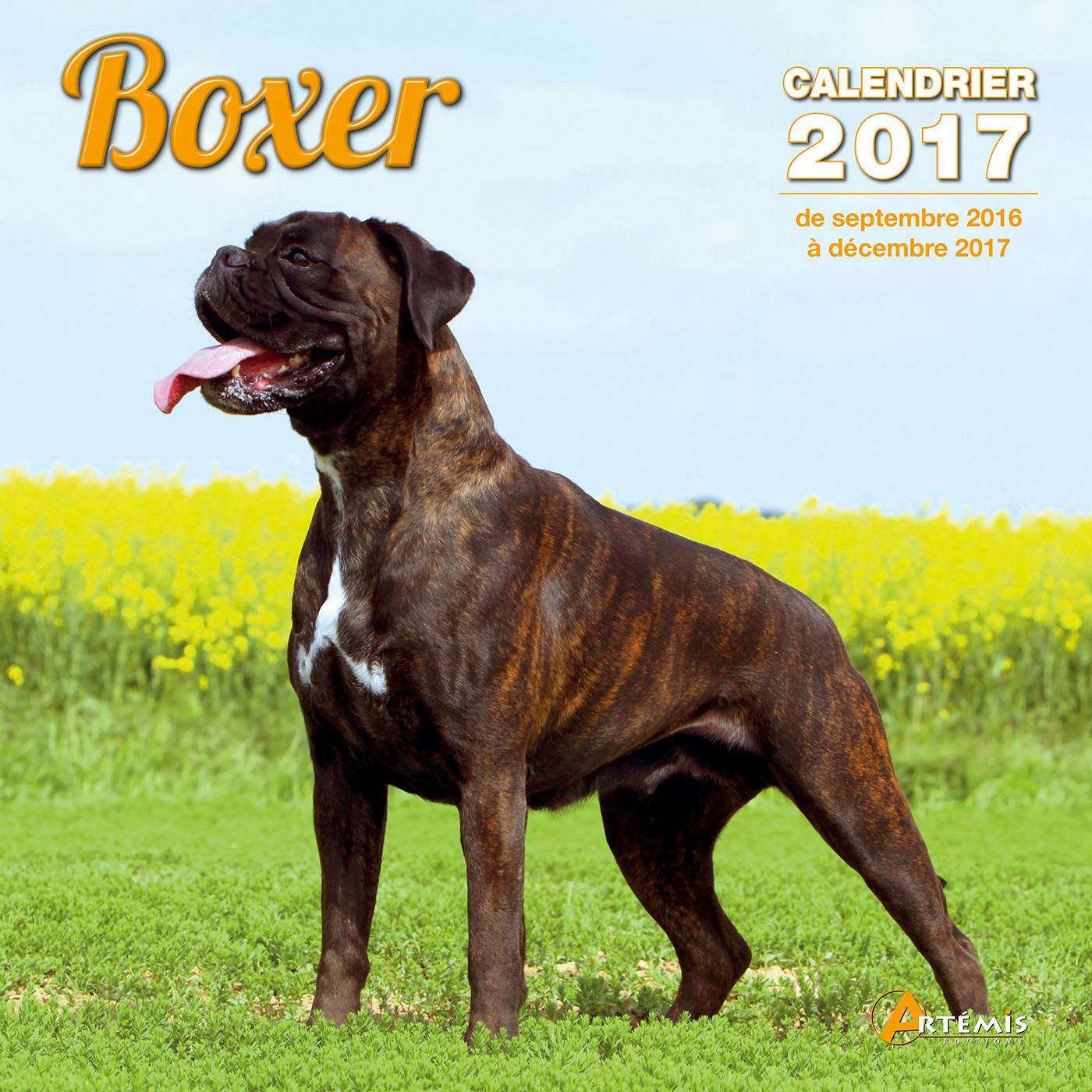 CALENDRIER BOXER 2017