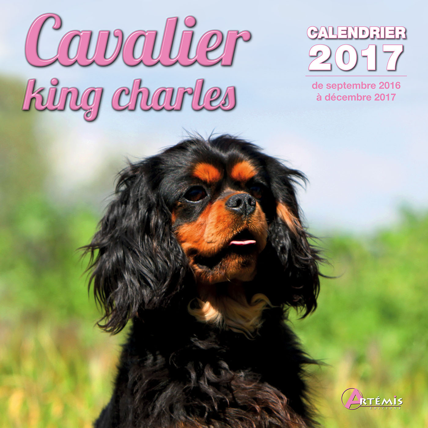 CALENDRIER CAVALIER KING CHARLES 2017