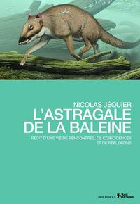 L'ASTRAGALE DE LA BALEINE