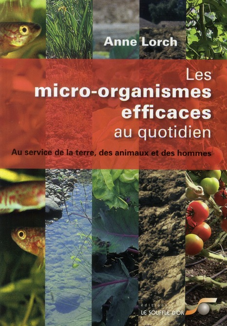 MICRO-ORGANISMES EFFICACES AU QUOTIDIEN (LES)