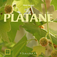PLATANE (LE)