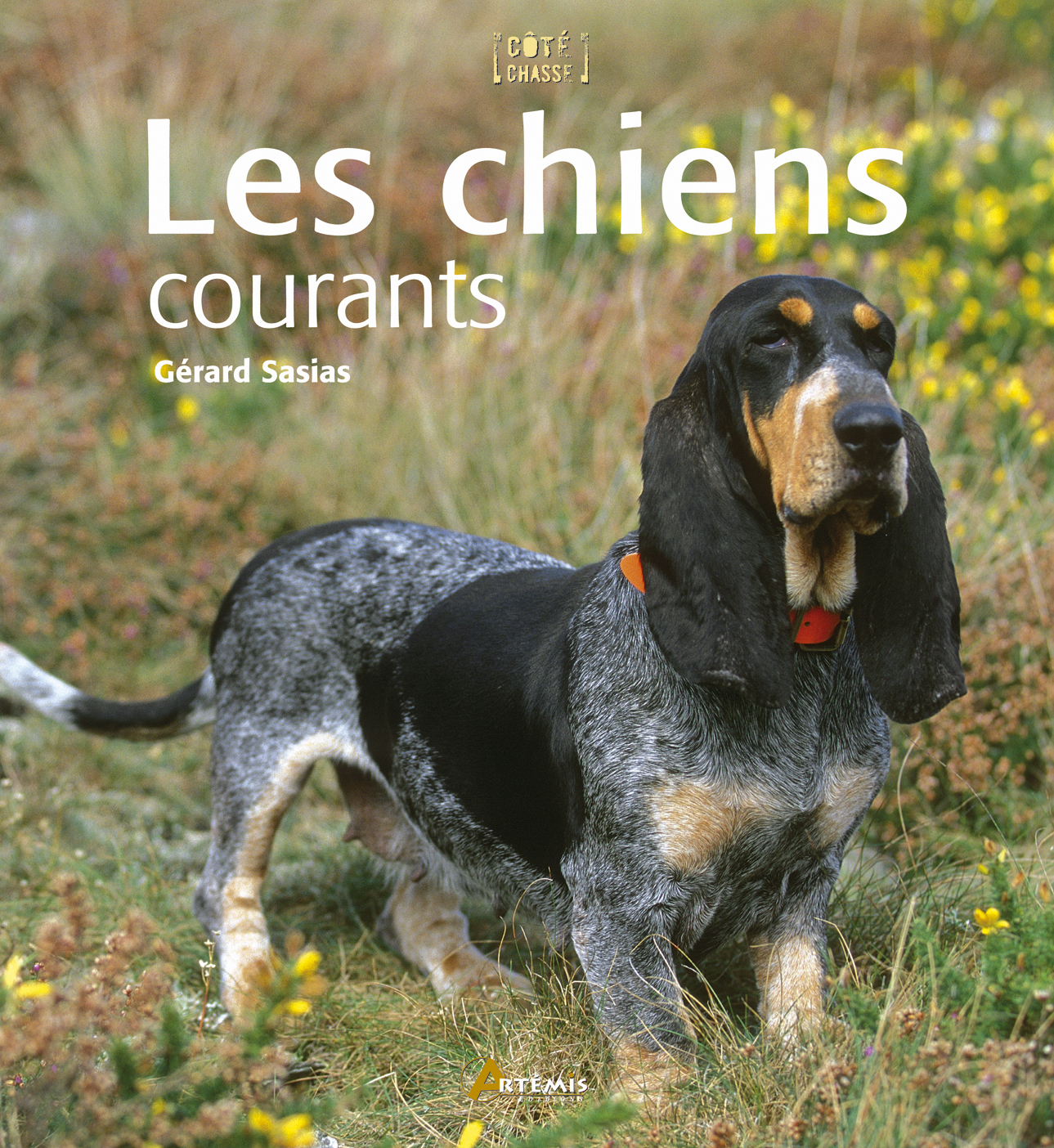 **CHIENS COURANTS