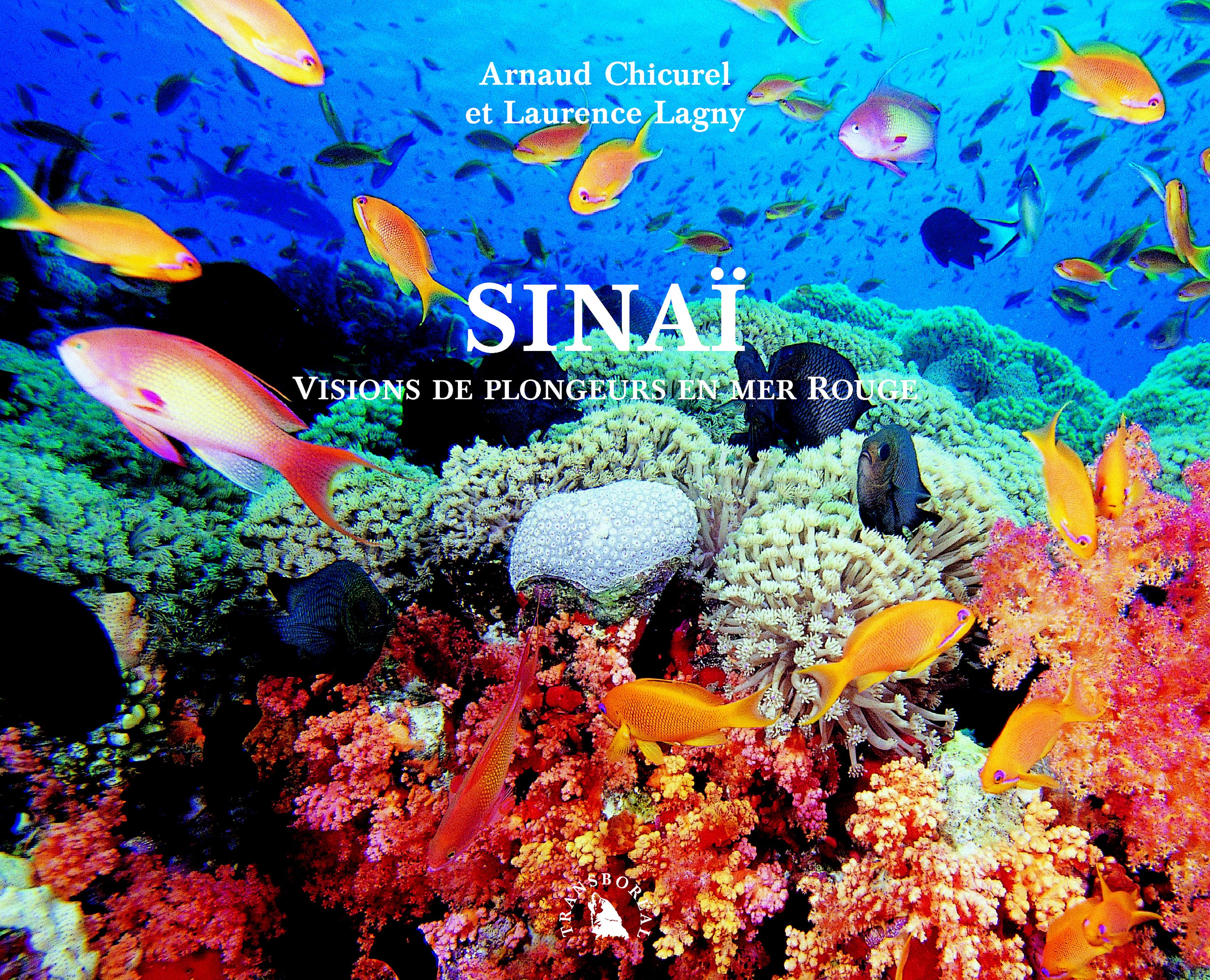 SINAI. VISIONS DE PLONGEURS EN MER ROUGE