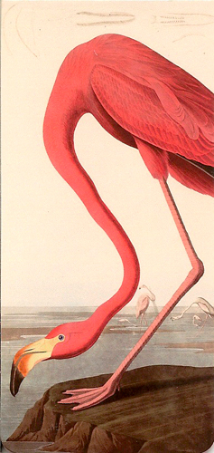 MARQUE PAGE FLAMANT ROSE