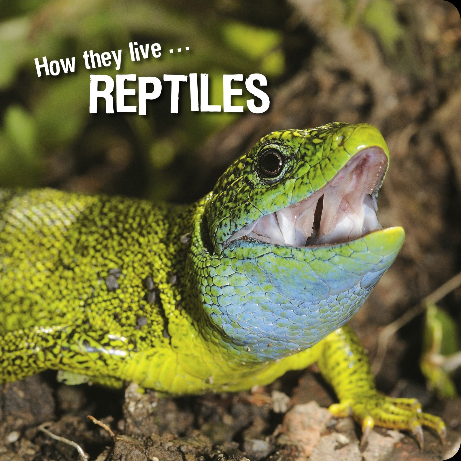 How they live... Reptiles