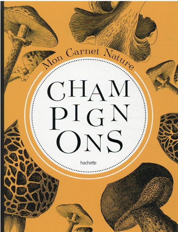 MON CARNET NATURE : CHAMPIGNONS