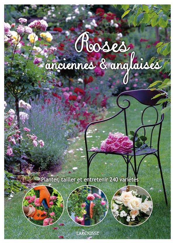 ROSES ANGLAISES ET ANCIENNES