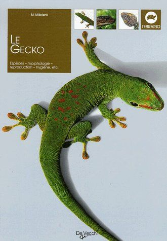 GECKO (LE)