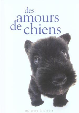 AMOURS DE CHIENS