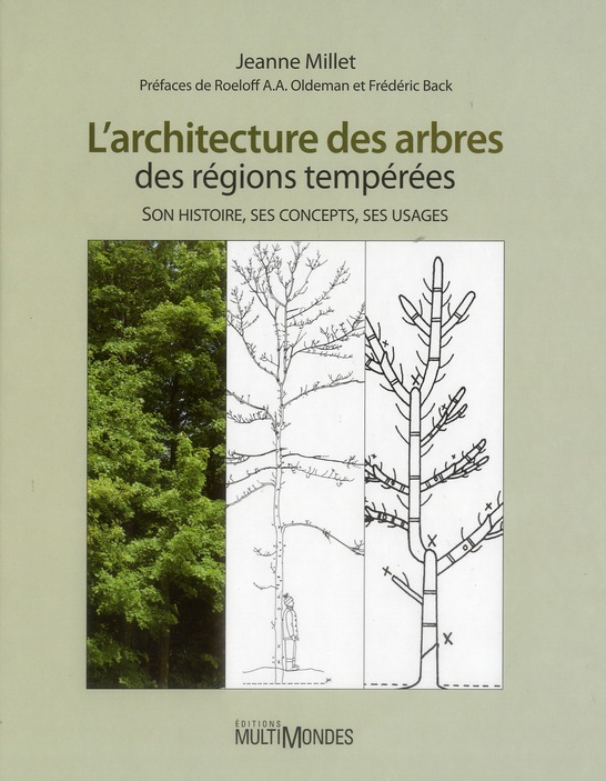 L ARCHITECTURE DES ARBRES DES REGIONS TEMPEREES VERSION RELIEE