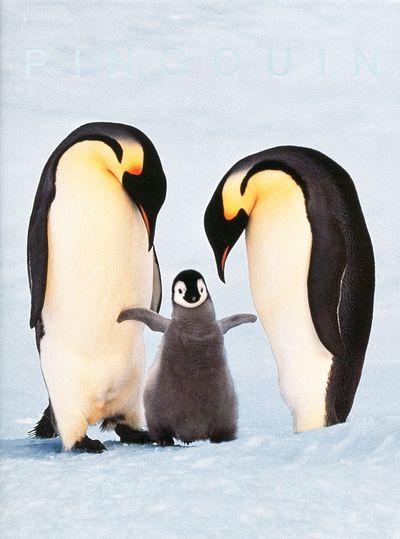 FO-25 LANTING PINGOUIN
