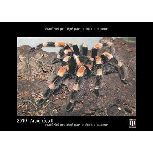 ARAIGNEES II 2019 - EDITION NOIRE - CALENDRIER MURAL TIMOKRATES, CALENDRIER PHOTO, CALENDRIER PHOTO