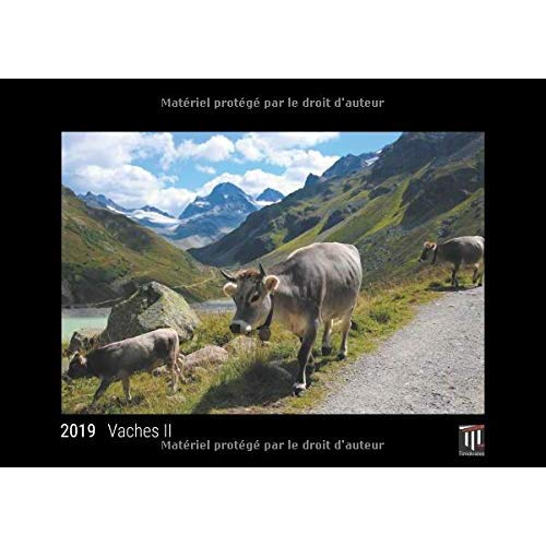 VACHES II 2019 - EDITION NOIRE - CALENDRIER MURAL TIMOKRATES, CALENDRIER PHOTO, CALENDRIER PHOTO - D