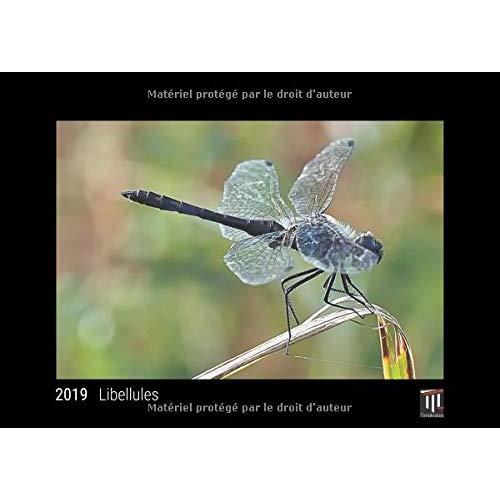 LIBELLULES 2019 EDITION NOIRE CALENDRIER MURAL TIMOKRATES CALENDRIER PHOTO CALEN