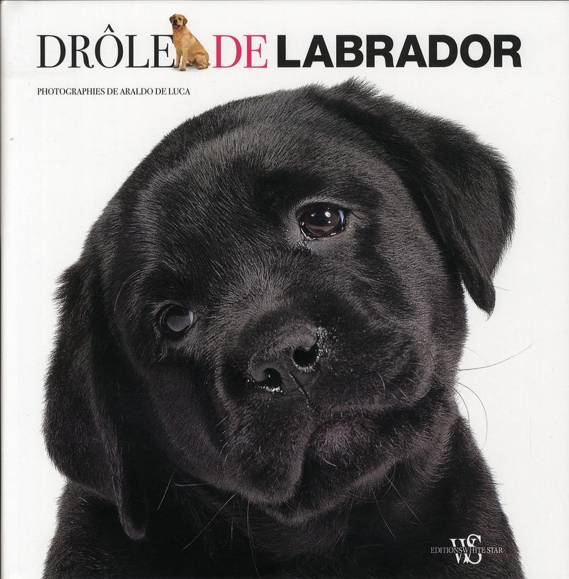 DROLE DE LABRADOR