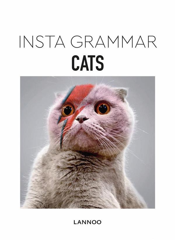 INSTA GRAMMAR - CATS /ANGLAIS