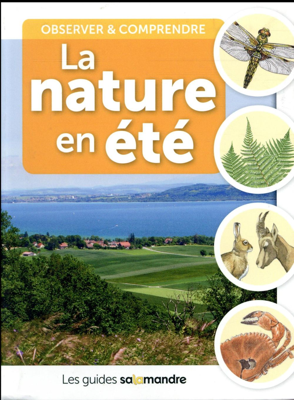 LA NATURE EN ETE