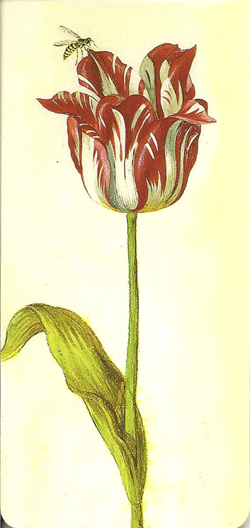 MARQUE PAGE TULIPE ROUGE (X 5)