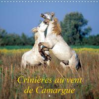 CRINIERES AU VENT DE CAMARGUE (CALENDRIER MURAL 2019 300 * 300 MM SQUARE) - CAMARGUE, TERRE DE VENTS