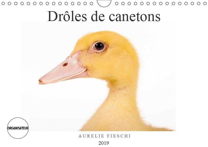 D ADORABLES CANETONS CALENDRIE