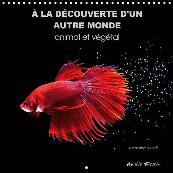 A LA DECOUVERTE D UN AUTRE MONDE ANIMAL ET VEGETAL CALENDRIER MURAL 2020 300 300 - UN UNIVERS GRAPHI