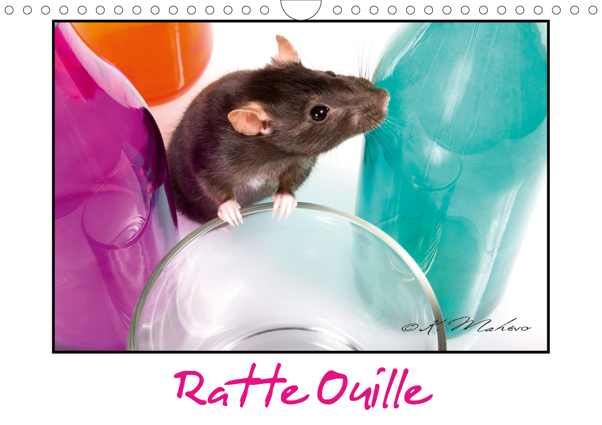 RATTE OUILLE CALENDRIER MURAL 2020 DIN A4 HORIZONTAL - GENTILLE MURIDEE CALENDRIER ME