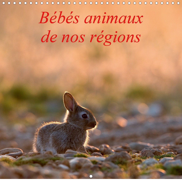 BEBES ANIMAUX DE NOS REGIONS (CALENDRIER MURAL 2020 300 * 300 MM SQUARE) - L'INSOUCIANCE DES BEBES A
