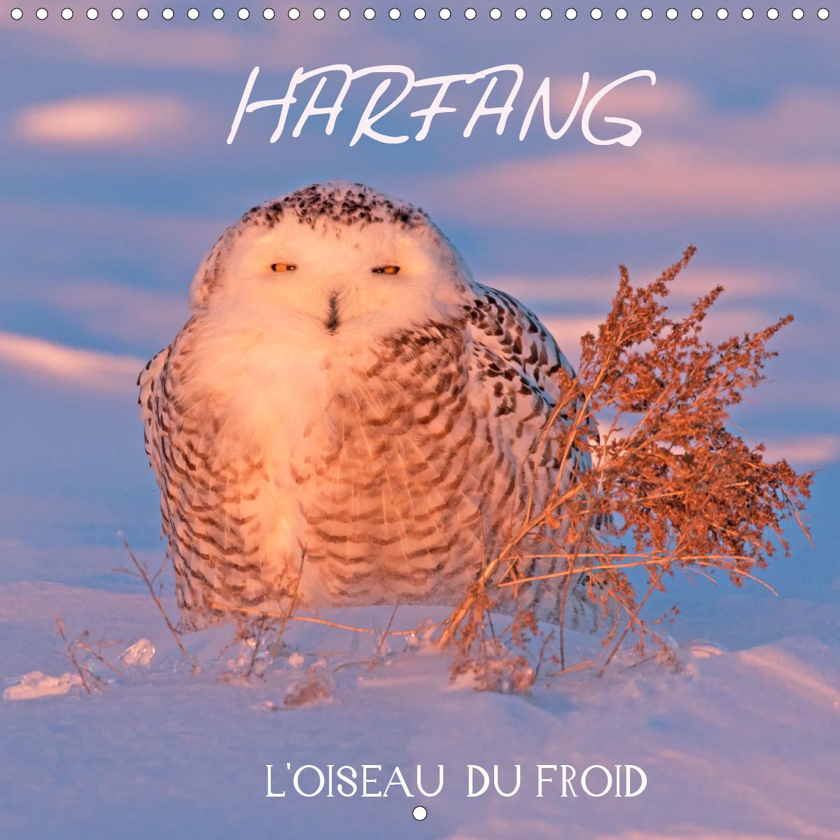 HARFANG, L'OISEAU DU FROID (CALENDRIER MURAL 2020 300 * 300 MM SQUARE) - 13 PORTRAITS DU HARFANG DES