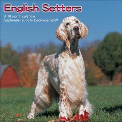 **SETTERS ANGLAIS - (2009)