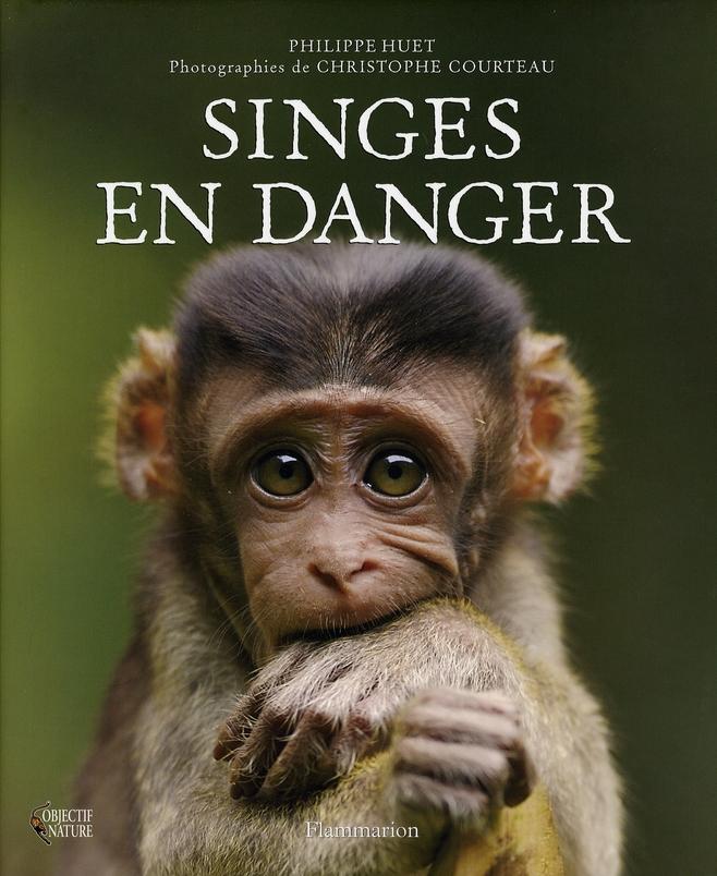 SINGES EN DANGER
