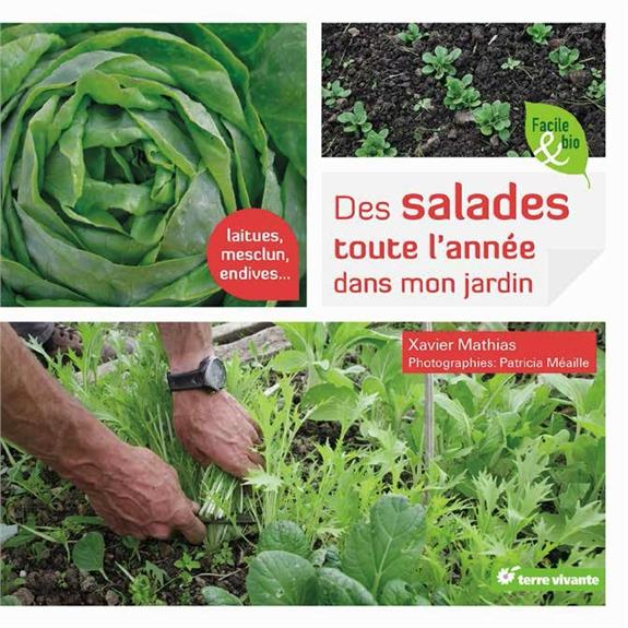 DES SALADES TOUTE L'ANNEE DANS MON JARDIN