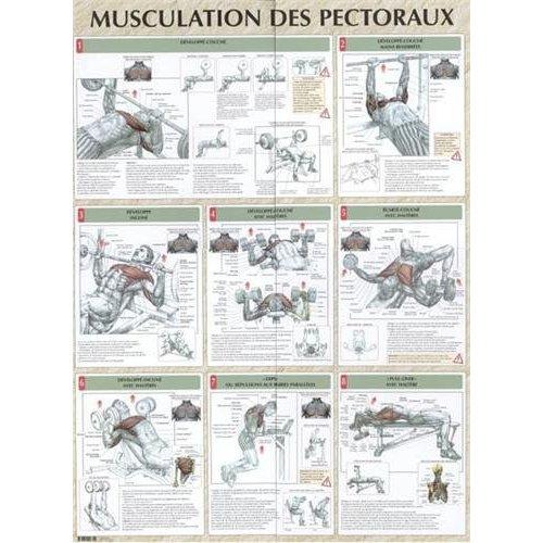 MUSCULATION DES PECTORAUX PLANCHE PLASTIFIEE