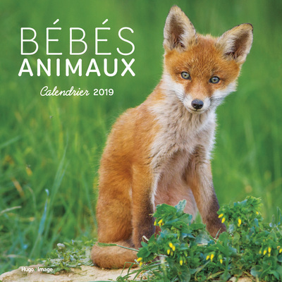 CALENDRIER MURAL BEBES ANIMAUX 2019