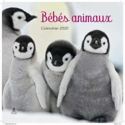CALENDRIER BEBES ANIMAUX 2020