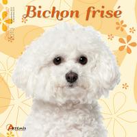 **BICHON FRISE (2013)