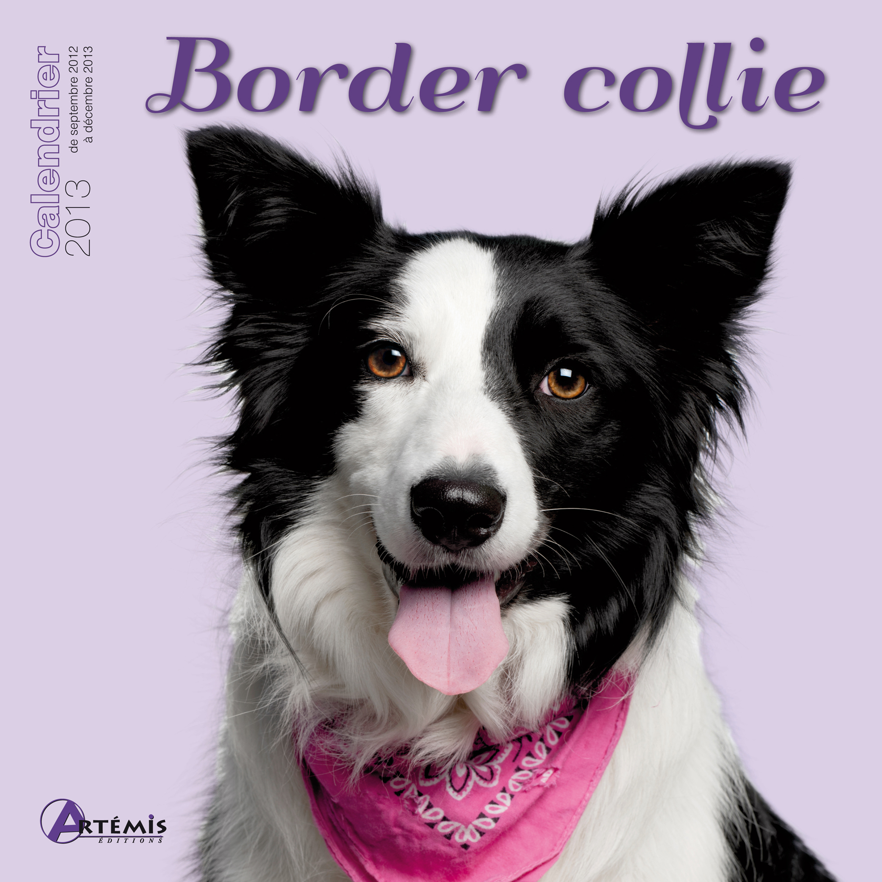**BORDER COLLIE (2013)