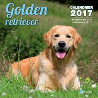 CALENDRIER GOLDEN RETRIEVER 2017