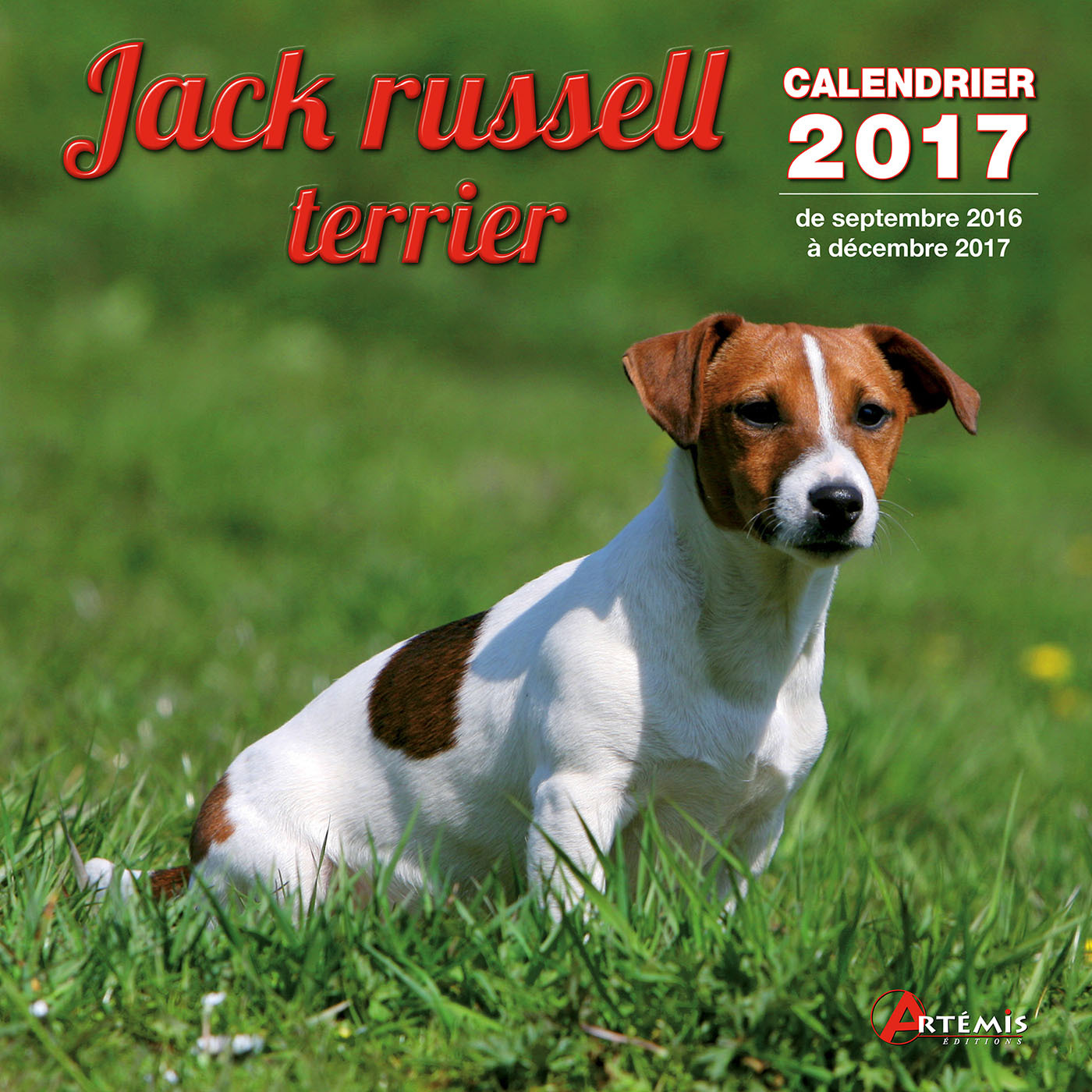 CALENDRIER JACK RUSSELL TERRIER 2017