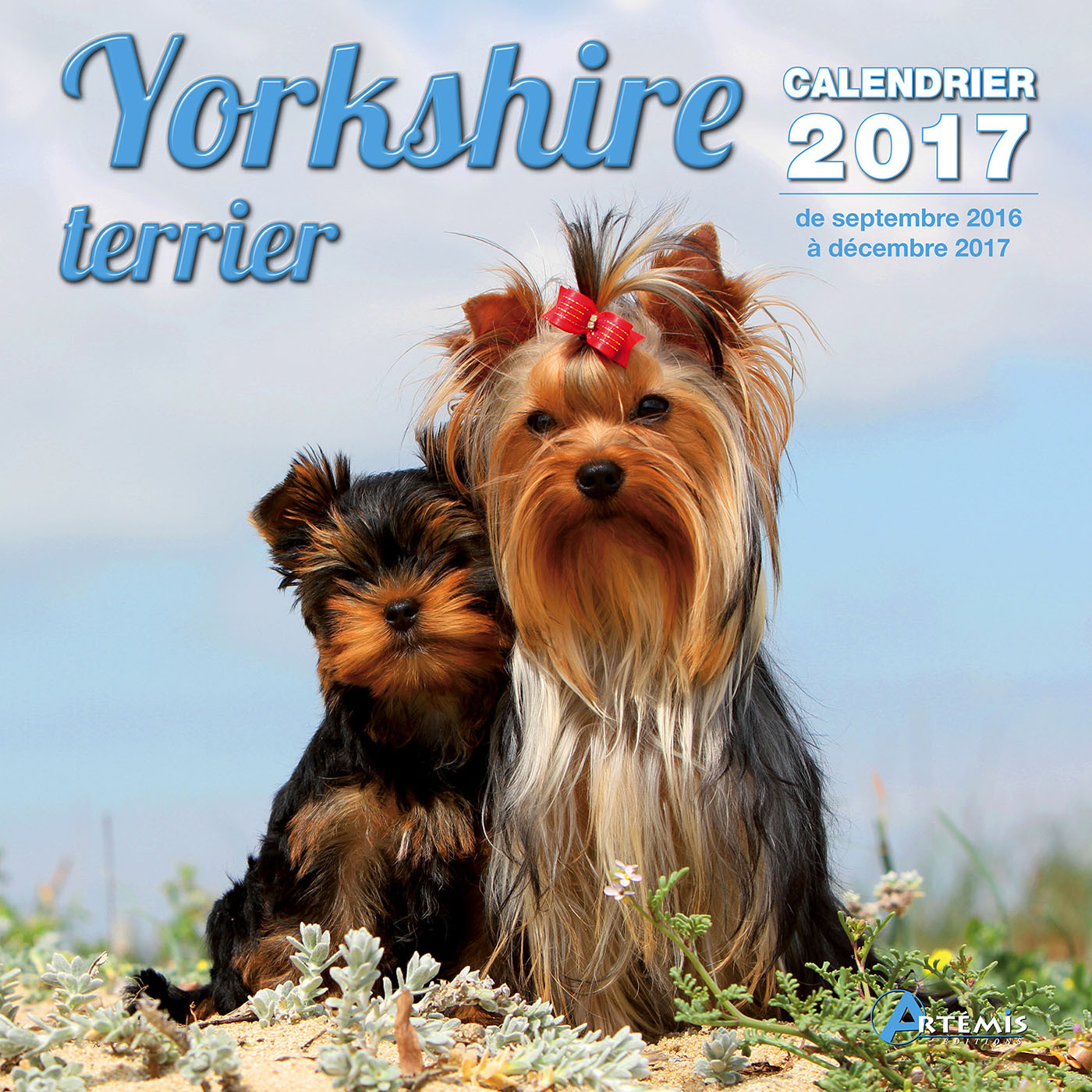 CALENDRIER YORKSHIRE TERRIER 2017